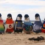 109-летний старик вяжет пингвинам теплые свитера