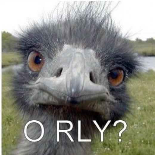 Чем полезно масло страуса эму: сравнение средств айхерба