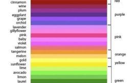 Как воспринимают цвета мужчины и женщины