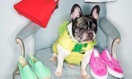 Shopbop использовал собак в качестве моделей